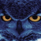 niteowl360's Avatar