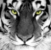 Tony.The.Tiger's Avatar