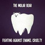 MolarBear.jpg