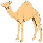 camel_small.png