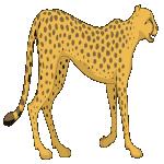 cheetah_small.png